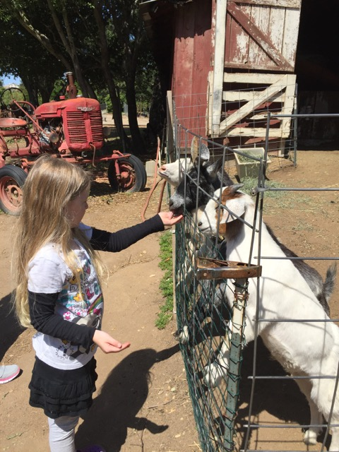 Myrtle Creek goats